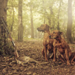 Deer Hunting with Dogs: Training Tips and Top 5 Breeds for Deer Hunting Dogs