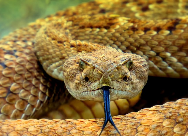 How to Treat a Snake Bite